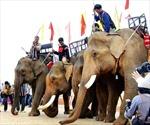 Độc đáo Lễ cúng sức khỏe cho voi của đồng bào Tây Nguyên