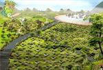 Quy hoạch nghĩa trang Hà Nội: 'Đã chậm còn không chắc'