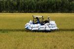 Thị trường xuất khẩu gạo sẽ sớm khởi sắc