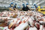 'Ép' cơ sở nuôi, chế biến cá tra vào tiêu chuẩn