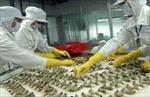 Cảnh báo sử dụng kháng sinh trong nuôi tôm