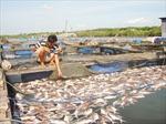 Cá nuôi bè chết hàng loạt trên sông Vàm Cỏ Đông