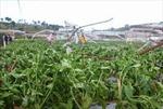 Đà Lạt: Mưa lốc gây thiệt hại nặng, làm 1 người mất tích