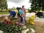 Nhanh chóng chuyển đổi diện tích trồng lúa hè thu kém hiệu quả
