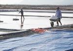 Mô hình sản xuất muối trải bạt có nguy cơ 'chết yểu'