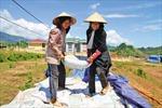 Phát triển cây cao su ở Lai Châu - Bài cuối