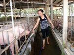 Chăn nuôi khởi sắc nhưng vẫn rủi ro