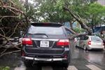 TP. HCM: Mưa lốc ngập đường, cây xanh gãy hàng loạt