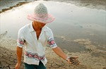 Bạc Liêu: Hơn 1.000 ha đất nuôi tôm hoang hóa vì thiếu nước