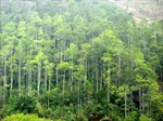 Báo động tình trạng nhận khoán phá rừng lấy đất nuôi tôm