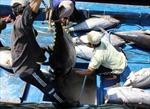 Hoàn thiện hạ tầng nghề cá