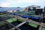 Kiên Giang phát triển kinh tế ven biển bền vững