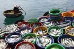 Chủ động nghiên cứu biển để phát triển bền vững