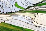 Ruộng bậc thang mùa đổ nước