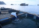Công ty Cổ phần Đức Khải mua tàu đánh cá cùng ngư dân bám biển
