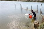 Thừa Thiên - Huế dành 709 tỷ đồng nuôi trồng thủy sản