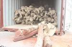 Tạm giữ 10 tấn gỗ quý không đảm bảo giấy tờ