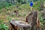 Công khai phá rừng phòng hộ ven biển xây quán nhậu