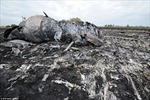 Điện chia buồn về việc máy bay Malaysia gặp nạn