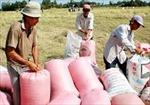 Khuyến cáo nông dân bán nhanh lúa tạm trữ