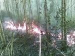 Bất cẩn gây cháy rụi rừng keo