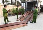 Nhập lậu 215 khúc gỗ trắc giấu trong chuồng lợn
