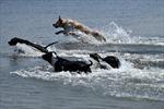 Bãi biển cho cún cưng tại Italy