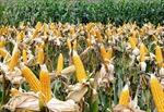 Bước tiến trong hiện đại hóa nông nghiệp Việt Nam