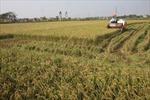 Điều chỉnh chính sách cho vay vốn với tam nông