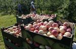 Nga: Lệnh cấm nhập khẩu nông sản, thực phẩm sẽ có lợi