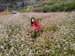 Mèo Vạc quy hoạch trồng hoa tam giác mạch