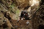 Người cổ đại tuyệt chủng ra sao?