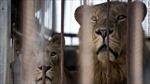 Vườn thú tại Gaza tan hoang vì bom đạn