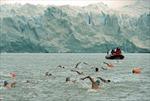 Thú bơi trong làn nước gần đóng băng
