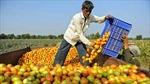 Gần 10 triệu nông dân EU thiệt hại do Nga trả đũa