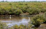 Giá trị Khu dự trữ sinh quyển thế giới châu thổ sông Hồng