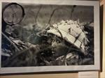Dấu ấn Việt Nam trong triển lãm ảnh của nhiếp ảnh gia Séc