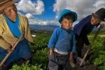 FAO kêu gọi thúc đẩy canh tác hộ gia đình