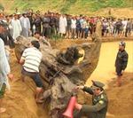 Chuyển gốc sưa 2 tấn về bảo tàng Quảng Bình