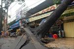 Mưa giông quật đổ cây la liệt Sài Gòn