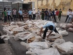 Hải Phòng: Bắt 1 tấn ngà voi giấu trên tàu biển