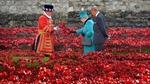 Biển hoa anh túc nhuộm đỏ chân Tháp London