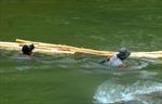 'Cõng' keo qua sông: Ẩn họa khôn lường