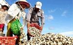 Tín dụng khu vực ĐBSCL hướng vào nông nghiệp