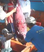 Thử nghiệm thành công máy câu cá ngừ đại dương do Việt Nam sản xuất