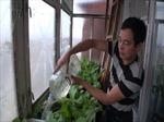 Người Việt ở 'tâm bão' chiến sự