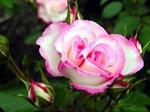 Sắc hoa rực rỡ chào mừng ngày nhà giáo Việt Nam