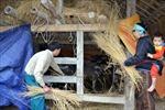 Chủ động phòng tránh rét cho đàn gia súc