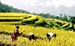 IFAD tài trợ cho Việt Nam 22 triệu USD xóa đói giảm nghèo
