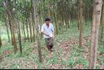 Ổn định đời sống của người làm nghề rừng